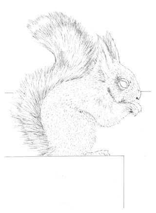 Drawn squirrel furry animal Draw a Squirrel Drawing a