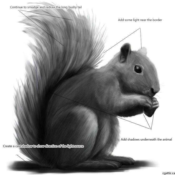 Drawn squirrel furry animal Techniques to Squirrel to Help