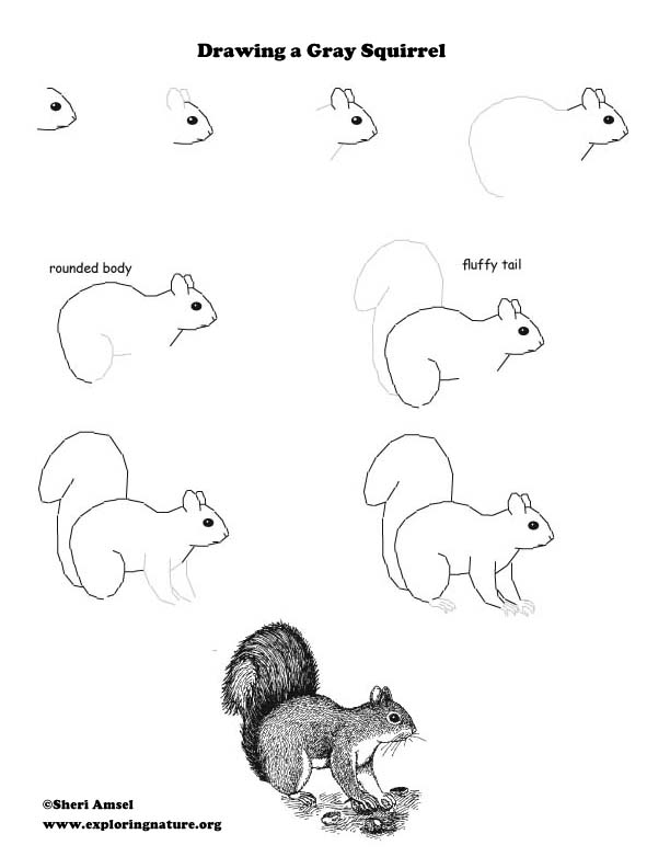 Drawn squirrel interesting animal Animal Kids Watching for for