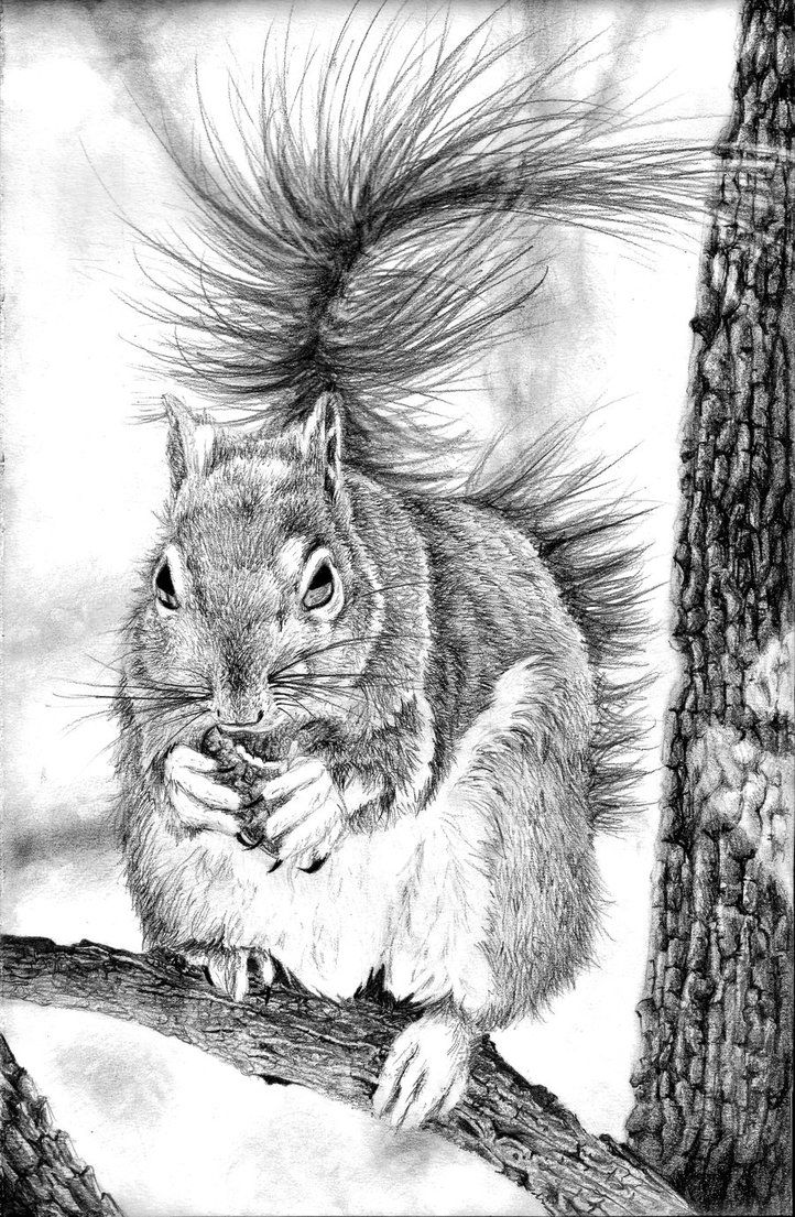 Drawn squirrel interesting animal Find more images on Pinterest