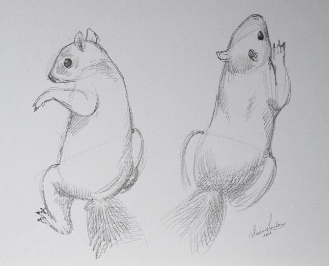 Drawn squirrel interesting animal Draw Video by Animals Lesson
