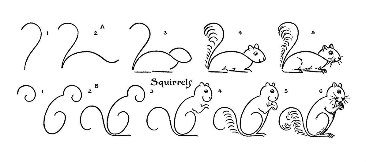 Drawn squirrel interesting animal Kids Draw Some – Fairy