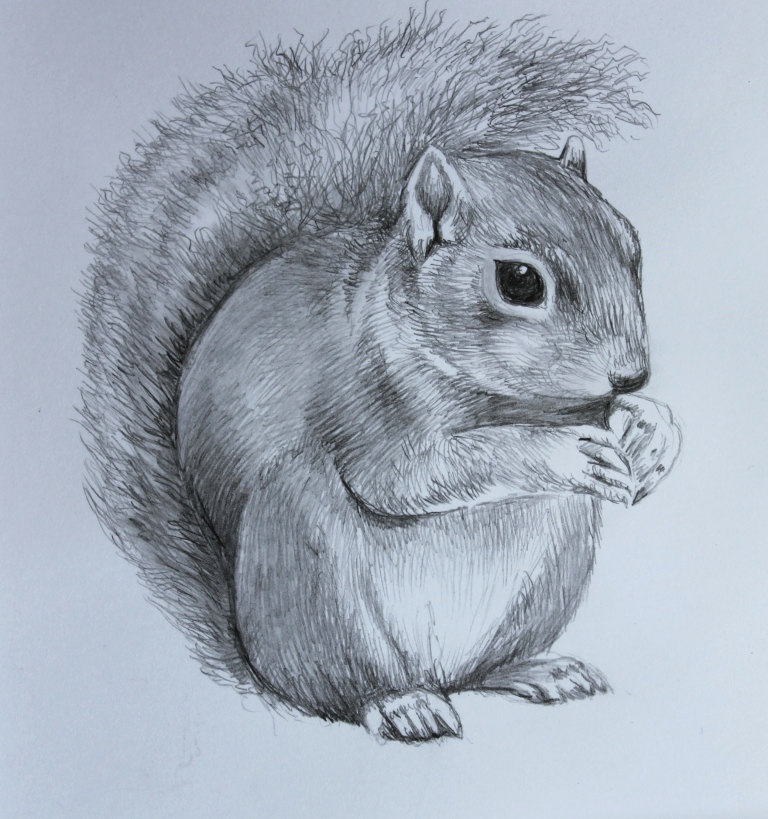 Drawn squirrel mammal Original Pencil Drawing  Cute