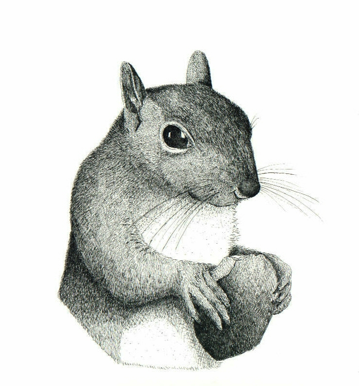 Drawn squirrel mammal Paper Draw On Squirrel drawing