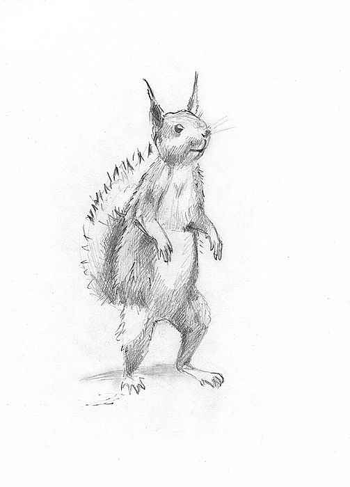 Drawn squirrel mammal About best Masha Drawing images