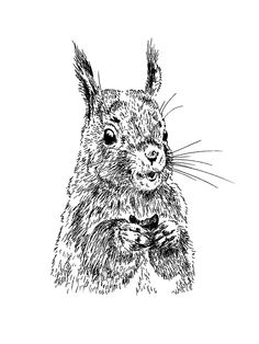 Drawn squirrel mammal By 'Smiling Masha Masha Squirrel'