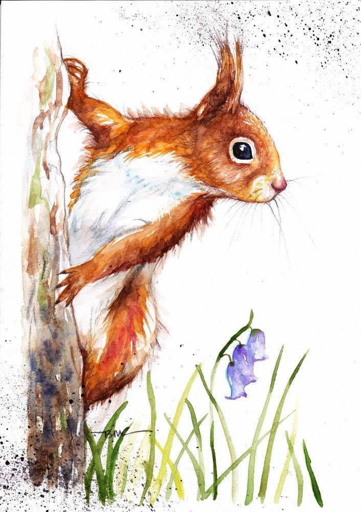 Red Squirrel clipart living thing #2