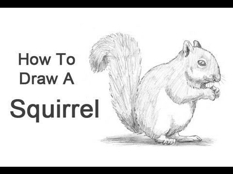 Drawn squirrel realistic A  to YouTube Draw