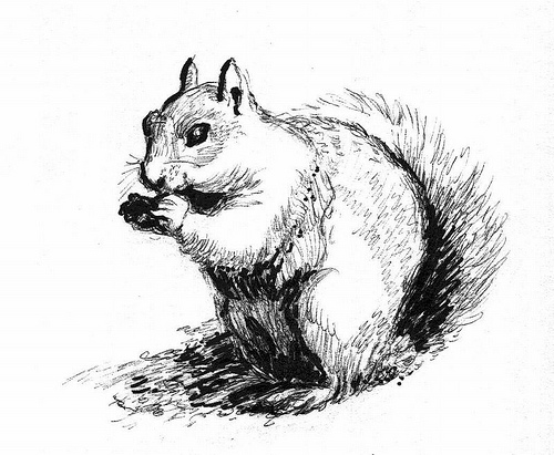 Drawn squirrel doodle About ground Art: a squirrel