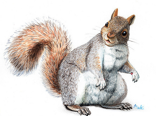 Drawn squirrel realistic Realistic How Draw How A