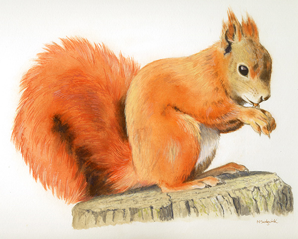Drawn squirrel red squirrel Done Golden Eagle with pictures