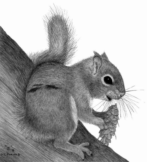 Drawn squirrel red squirrel Red drawing squirrel Red L