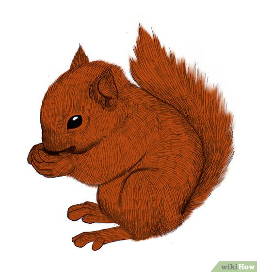 Drawn squirrel red squirrel Pictures) Squirrel (with a Step