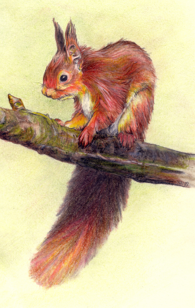 Drawn squirrel red squirrel Drawing European photo#28 red Drawing