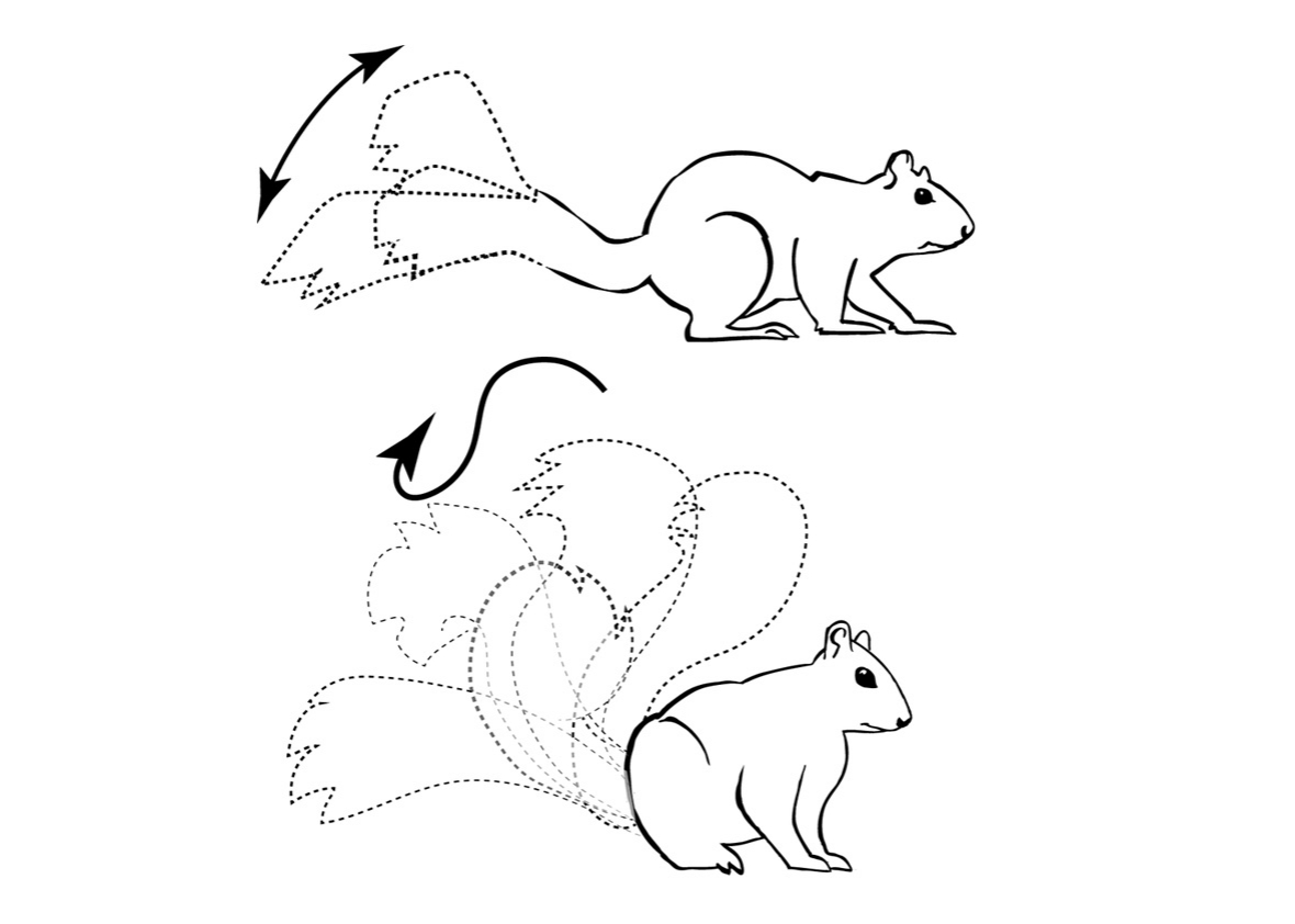Drawn squirrel mammal Frustration their express  160512_SCI_Squirrel