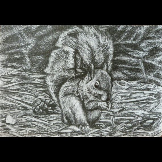 Drawn squirrel wildlife Squirrel Wildlife drawn and Squirrel