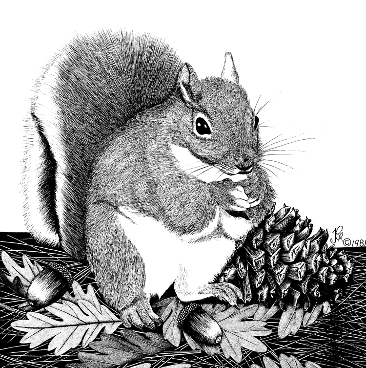 Drawn squirrel wildlife Living  Wildlife with Wildlife