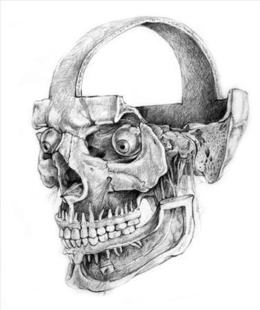 Drawn ssckull anatomy Traditional Anatomy Anatomy (skull) Hughes