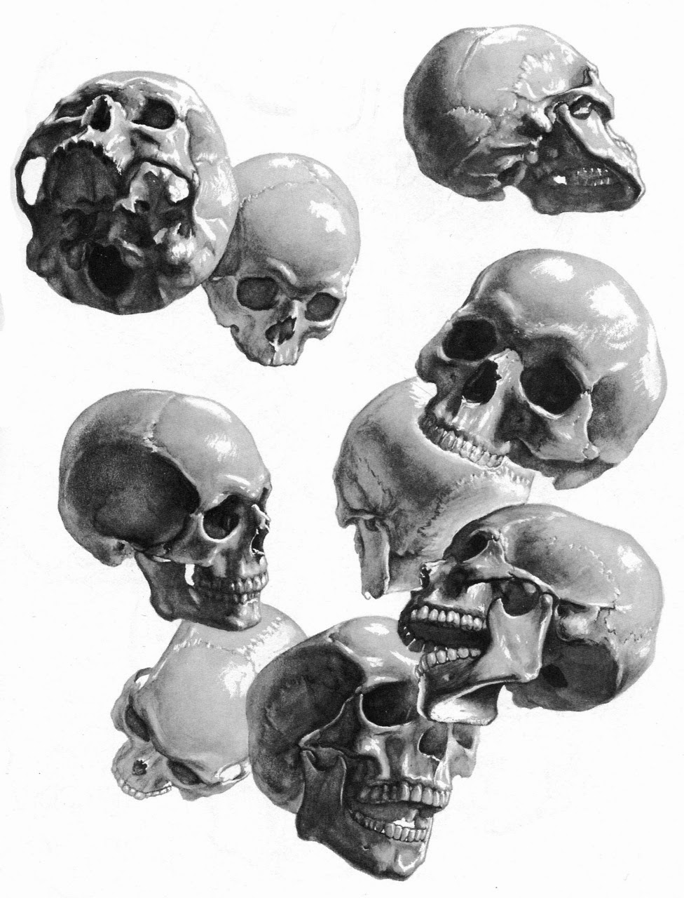 Drawn ssckull anatomy For Artist Stephen Human for