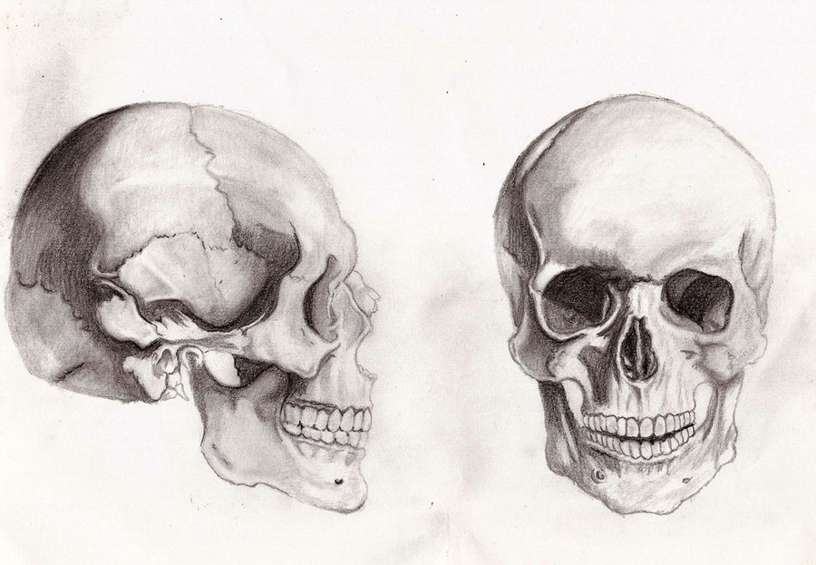 Drawn ssckull anatomy Skull by on anatomy by