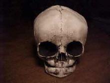 Drawn ssckull baby Replica Human Skull Skeleton Baby