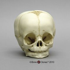 Drawn ssckull baby 1age: old child Skull baby