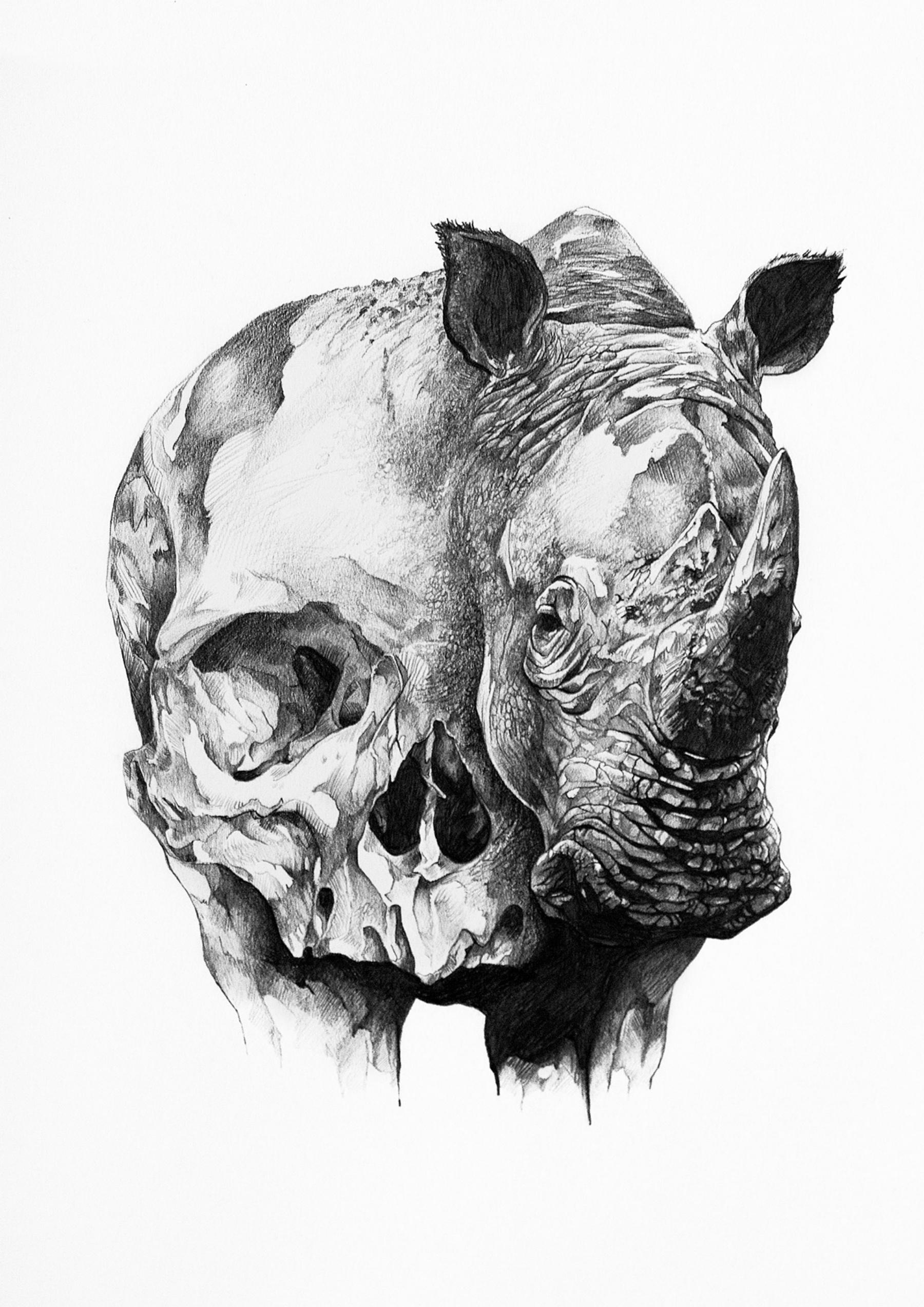Drawn rhino realistic And Black Ivan_Kamargio_Skull_Drawings_4 White Skull