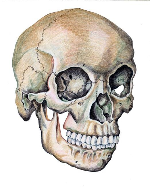 Drawn skull color From Muriel by Areno study