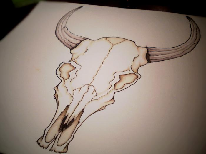 Drawn skull cow Skull Drawings on WingsDurus by