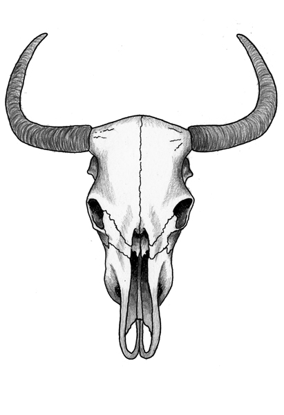 Drawn skull cow Skull cow Search  Google