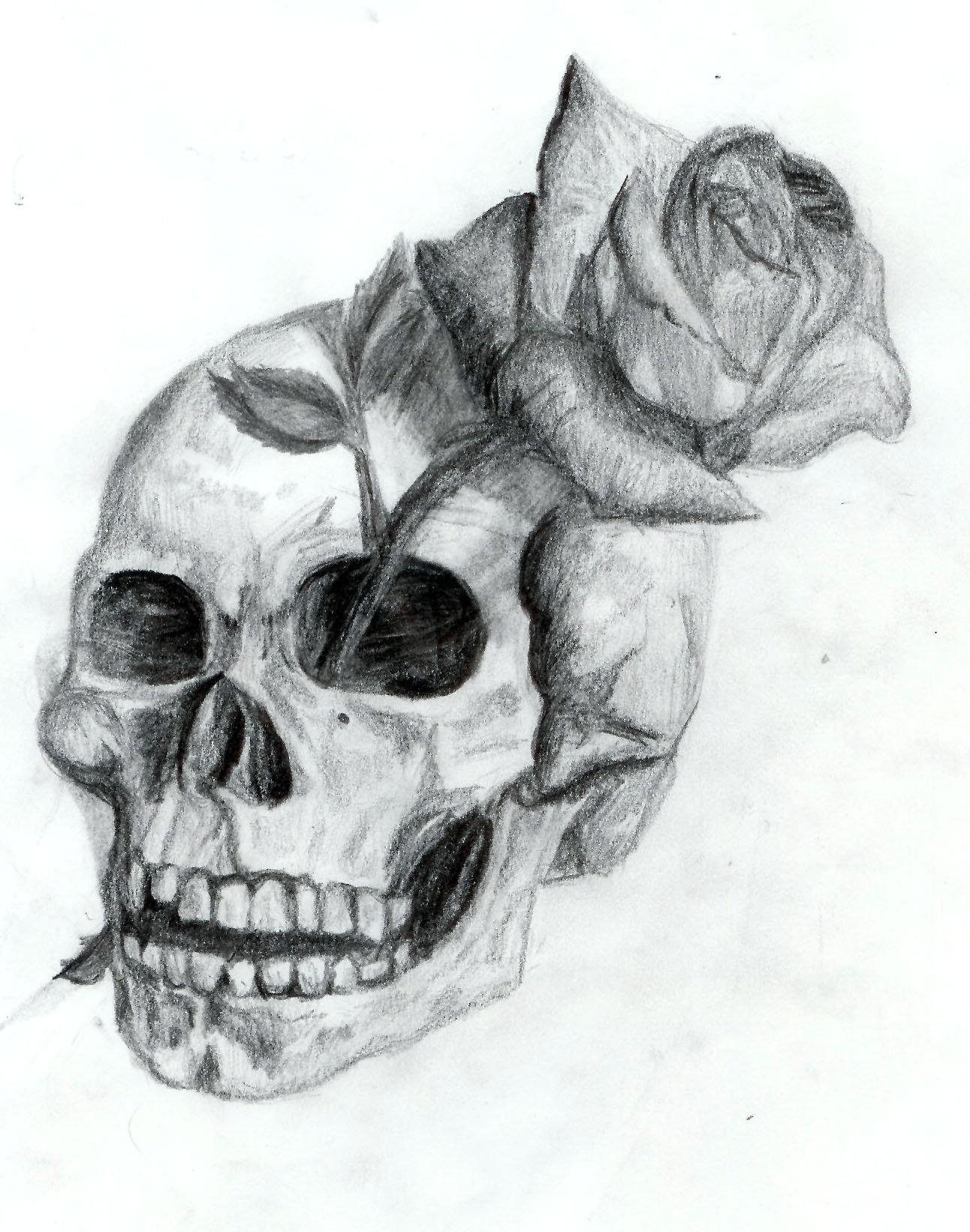 Drawn ssckull creative And Dyslogistic Skull Skull Rose