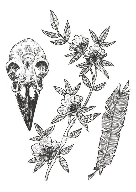 Drawn ssckull crow Tattoo Pinterest ideas and (can't
