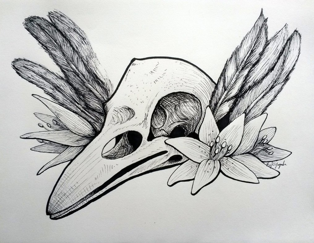 Drawn ssckull crow Shewolf444 DeviantArt Skull Crow by