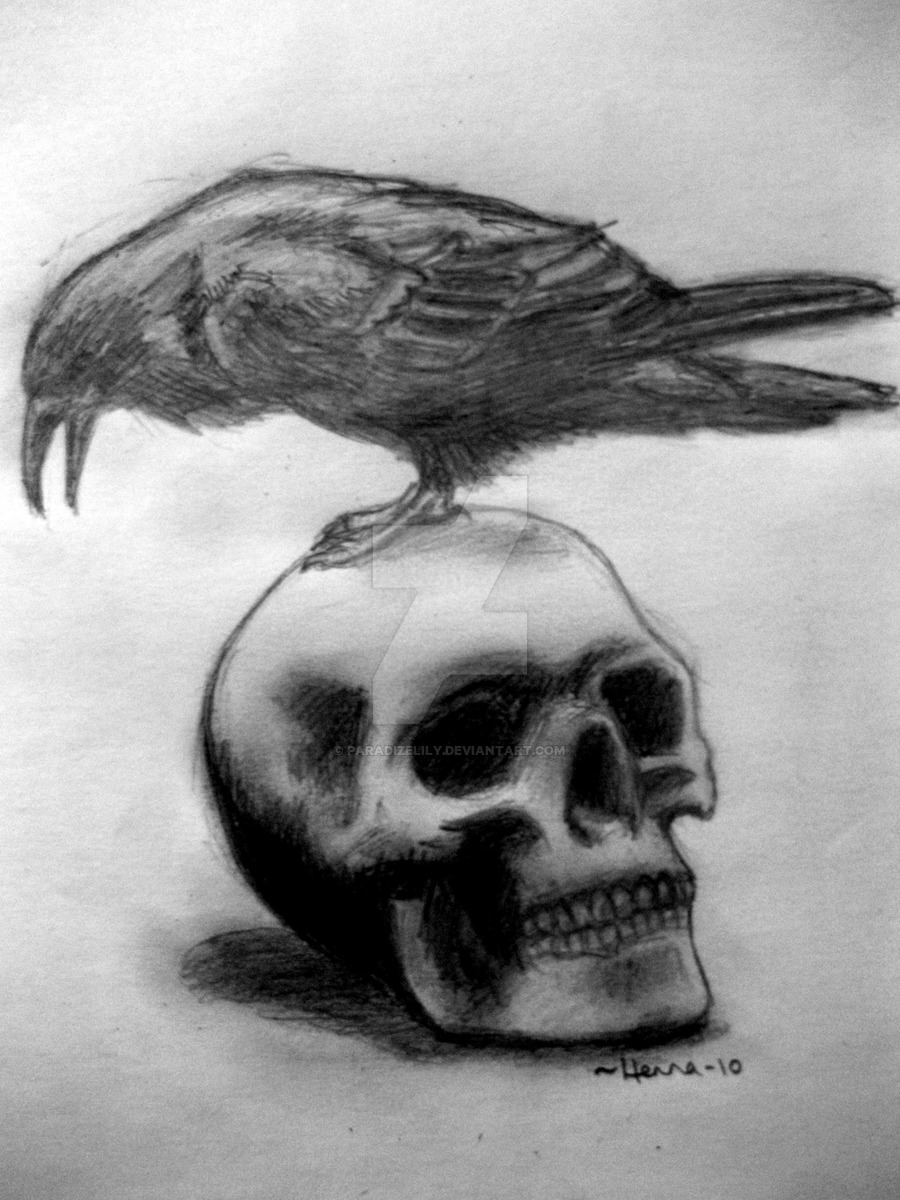 Drawn ssckull crow The ParadizeLily ParadizeLily Crow Skull