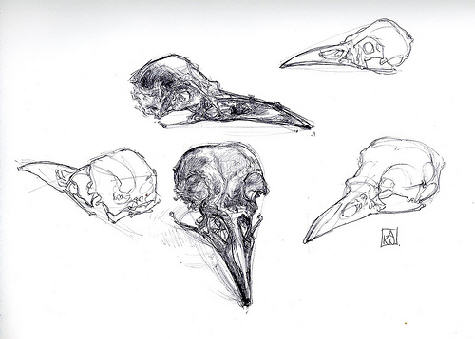 Drawn ssckull crow Work Pinterest by in (digital