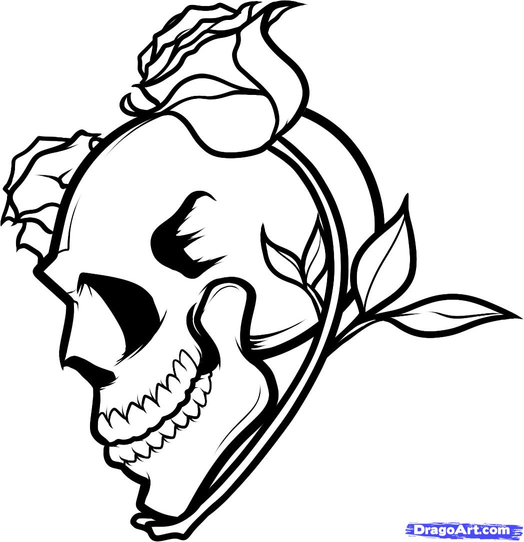 Drawn skull epic A How and Roses and