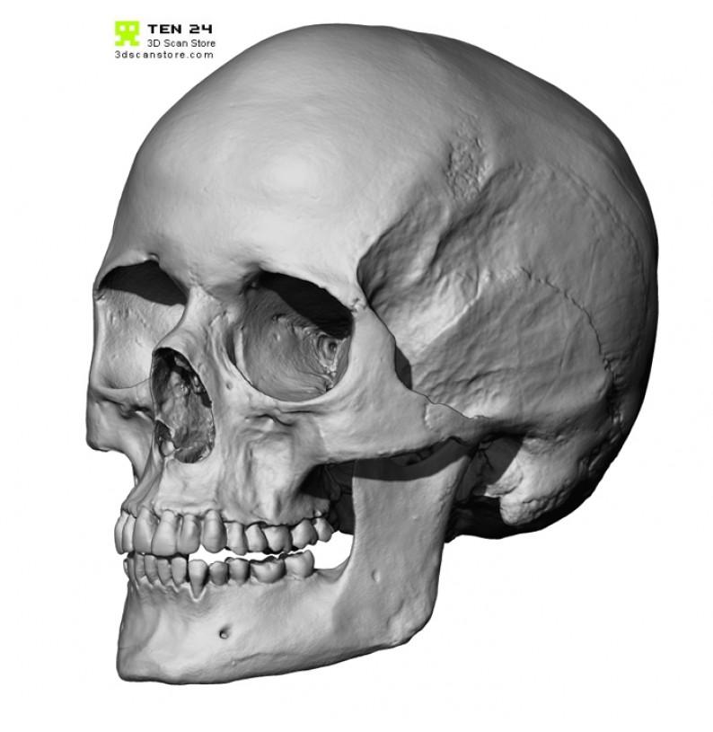 Drawn skull female skull Bundle Male skull Female skull