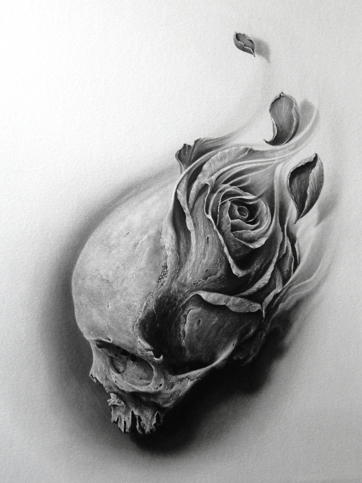 Drawn ssckull flower And Illustrating Beautifully Death and