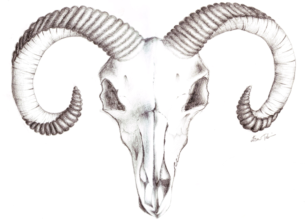 Drawn ssckull goat Goat murderingdoll drawings tattoo Goat