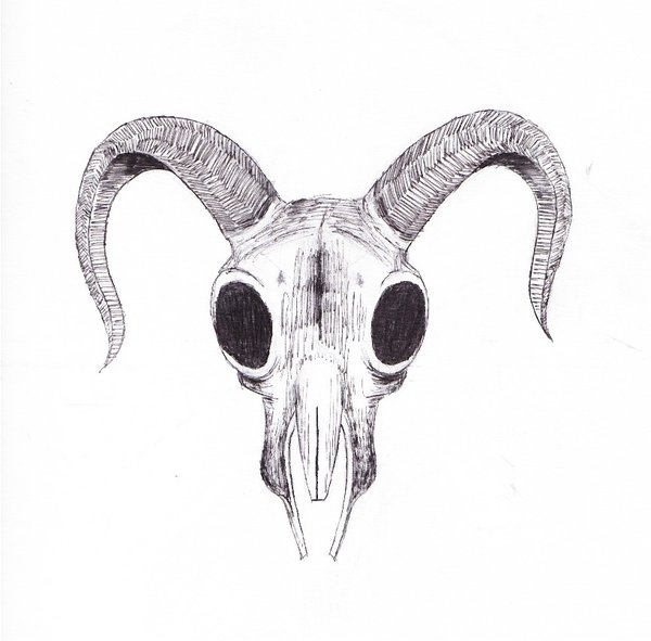 Drawn ssckull goat  Art Skull Goat