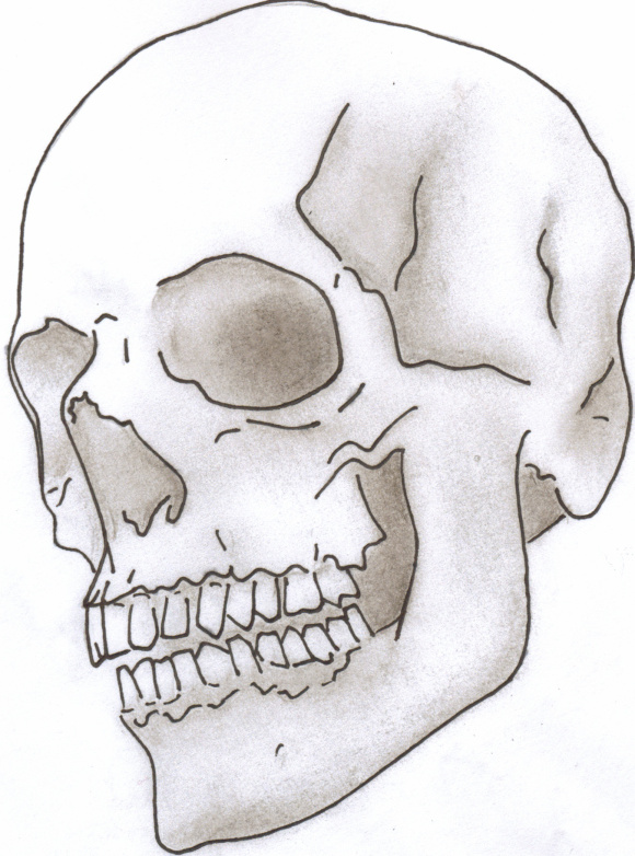 Drawn skull shaded Drawing line Shaded  drawing