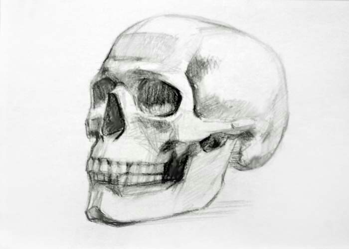 Drawn ssckull nose 36 Drawing best drawing on