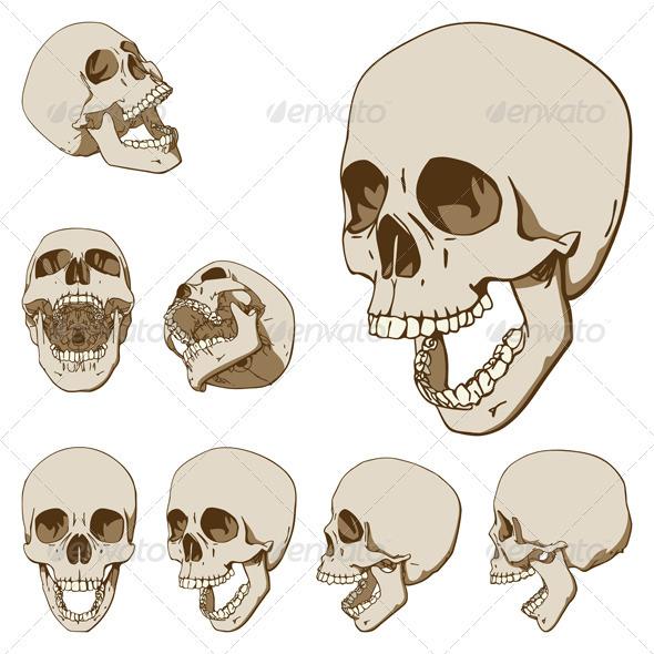 Drawn skull perspective Seven  Skulls Set