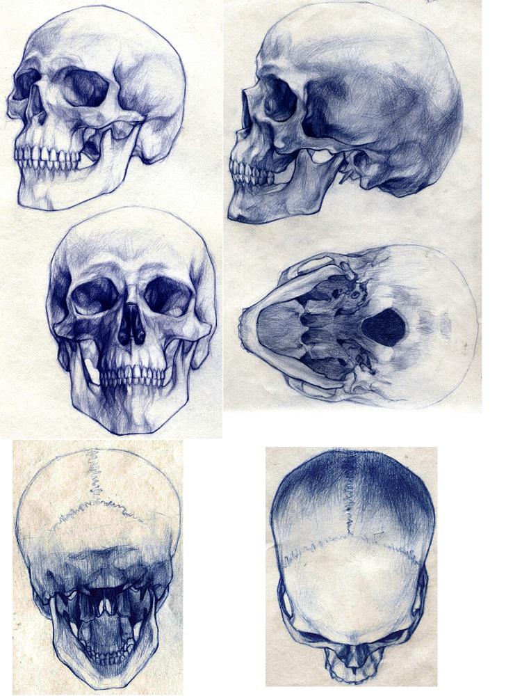 Drawn skull perspective Design drawings Skull  art