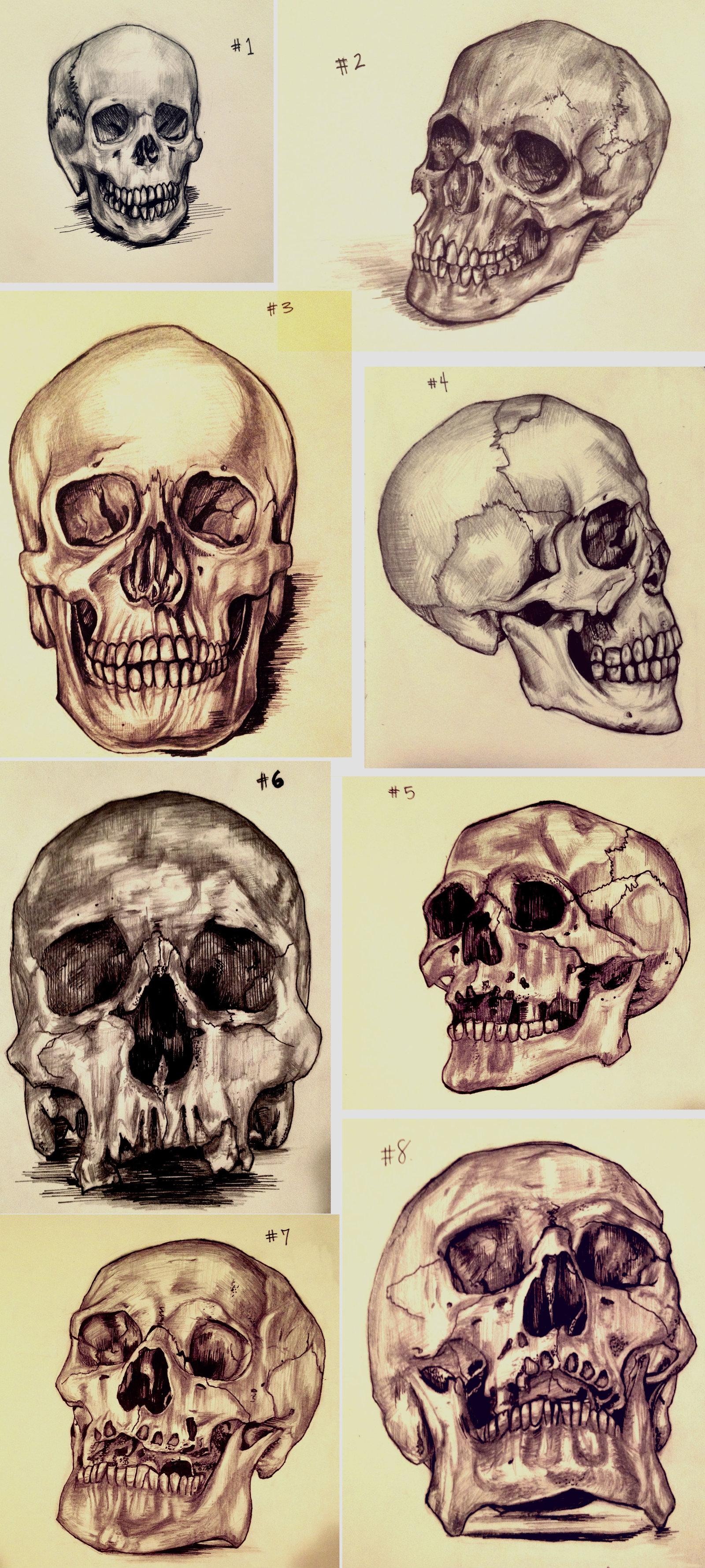 Drawn ssckull perspective DeviantArt Skull amirafox Sketches Sketches