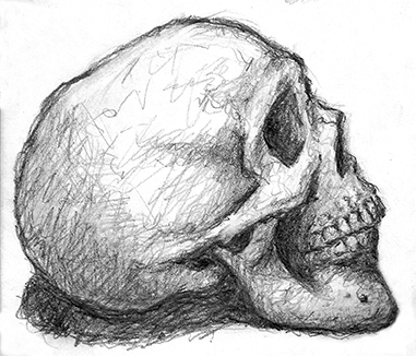 Drawn skull profile You you like draw Can