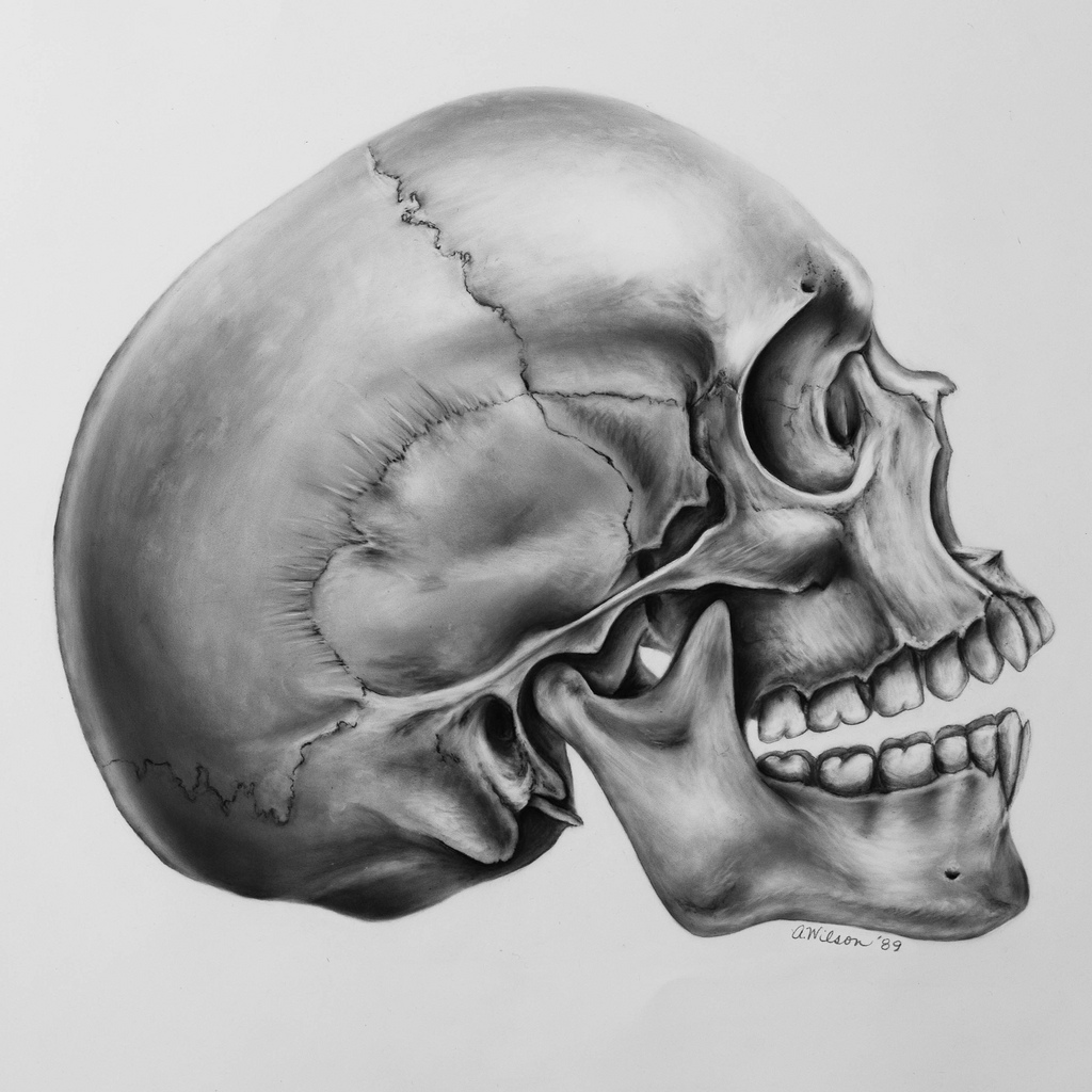 Drawn skull profile Fr…  Drawing Life by