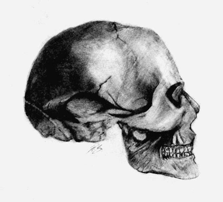 Drawn skull profile R human DeviantArt profile by