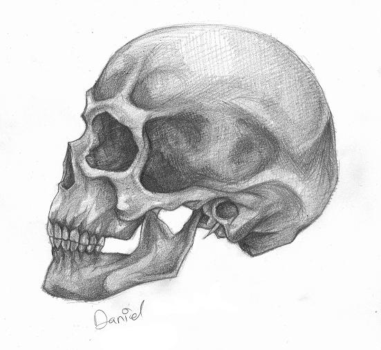Drawn skull profile Profile by by DeviantArt profile