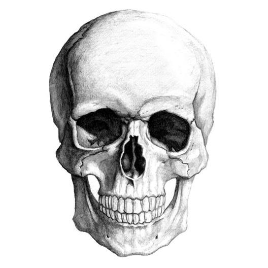 Drawn skull shaded And on What from The